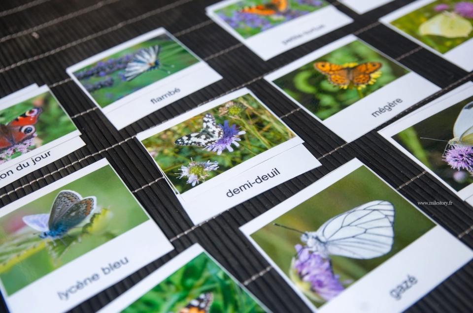 Cartes de nomenclature papillons à télécharger + livres et activités