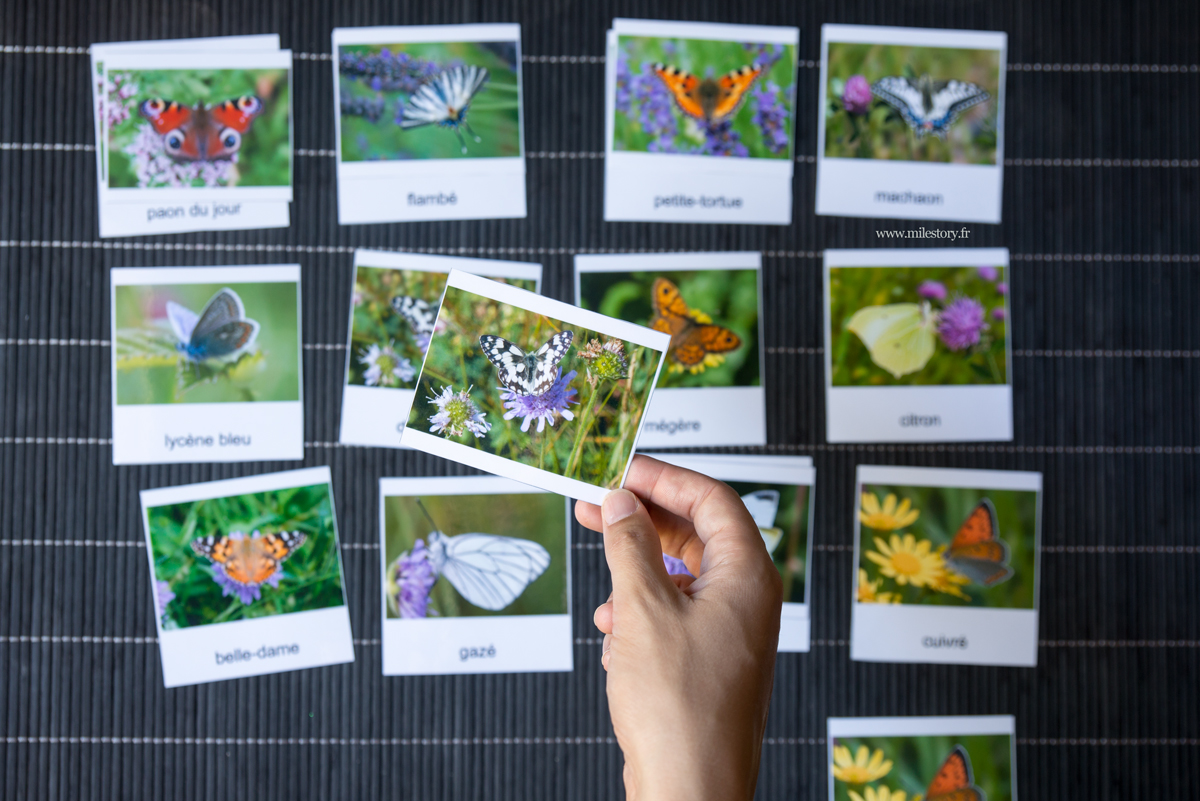 cartes de nomenclature papillon