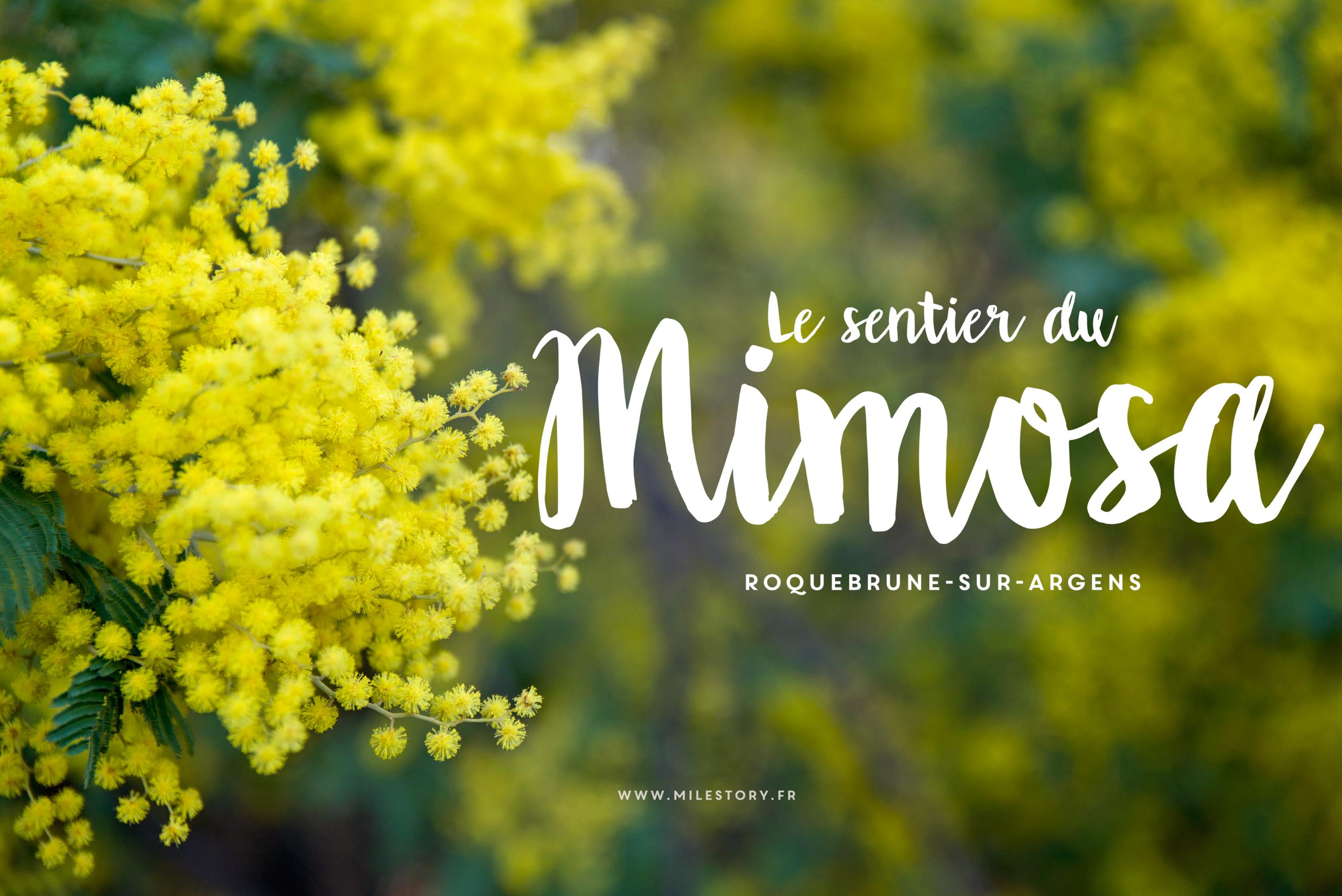 Randonnée sentier du Mimosa à Roquebrune-sur-Argens