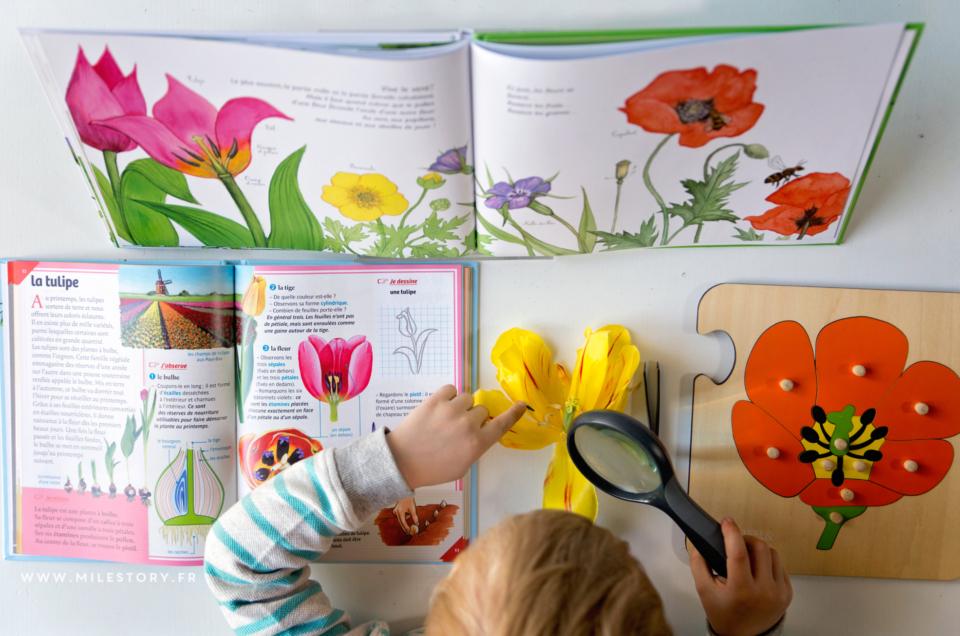 Livres et activités de printemps – coschooling & ief maternelle