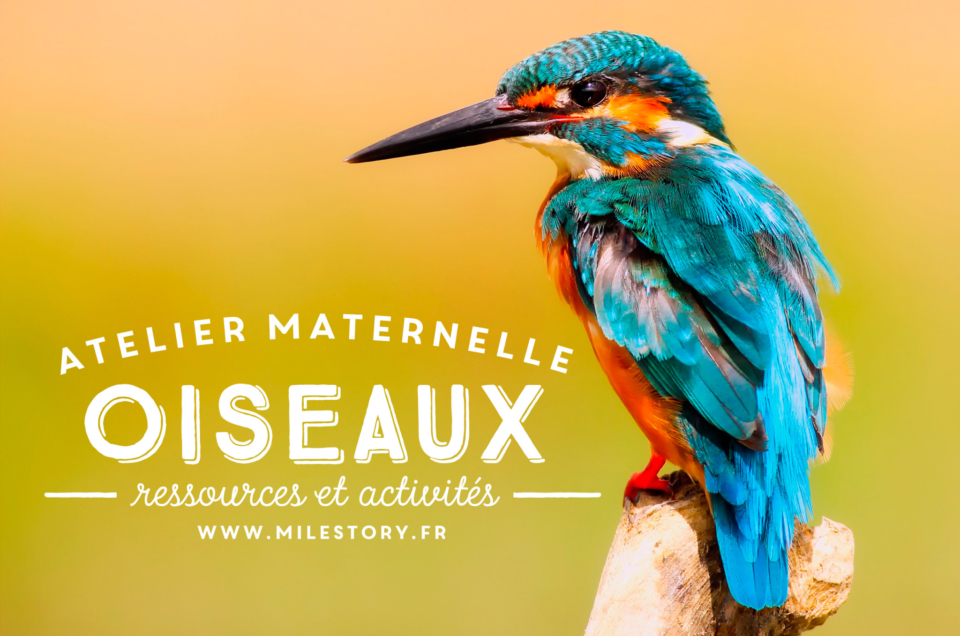 activités maternelle oiseaux + Cartes nomenclature oiseaux – coschooling