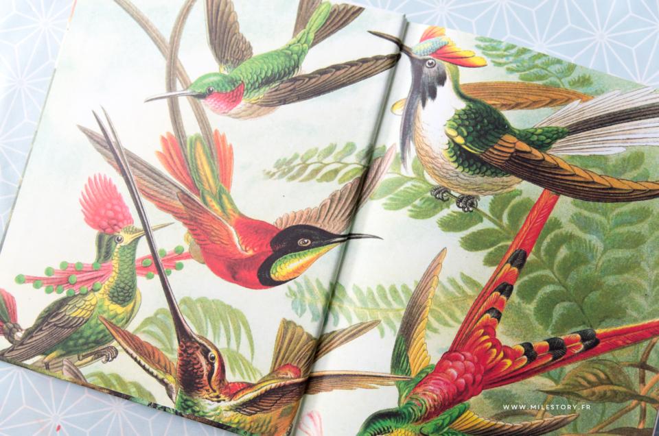 activités maternelle oiseaux + Cartes nomenclature oiseaux