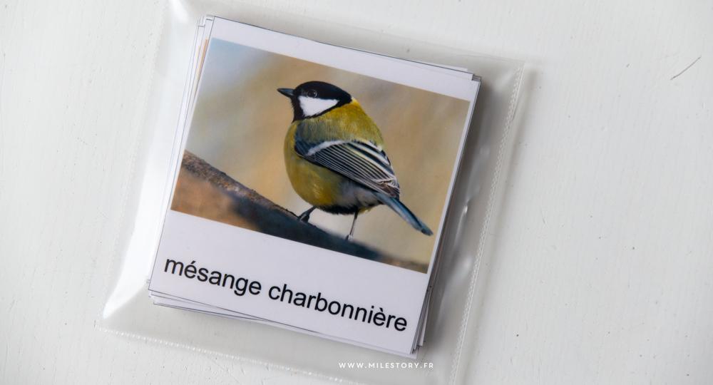 Activites Maternelle Oiseaux Cartes Nomenclature Oiseaux