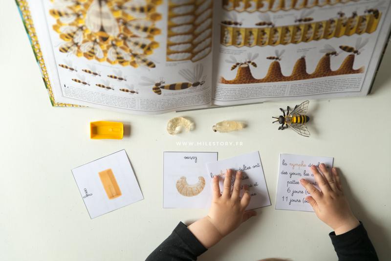 Activit abeille maternelle ye41 humatraffin - Livre maternelle gratuit ...