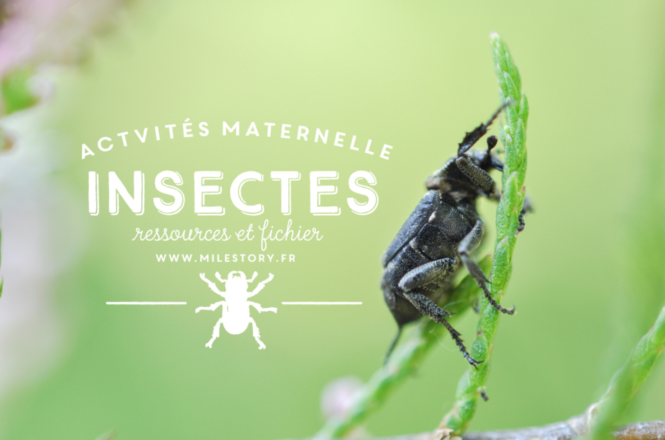 Livres et activités sur les insectes (et autres petites bêtes) en maternelle – coschooling