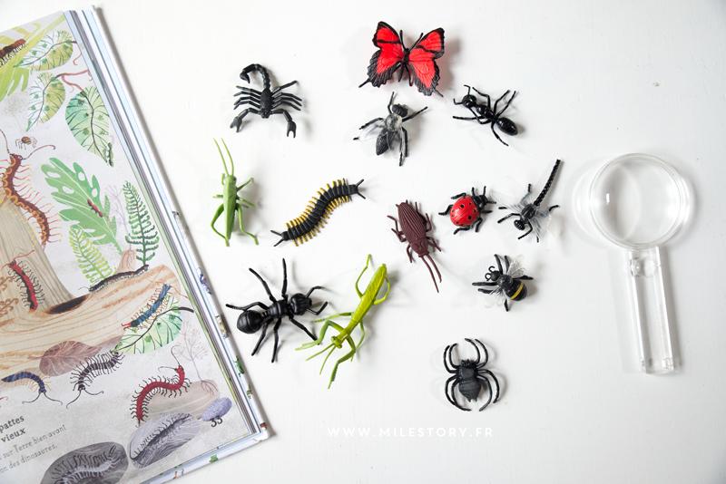 Livres et activit s sur les insectes et autres petites b tes milestory - Reconnaitre les insectes xylophages ...