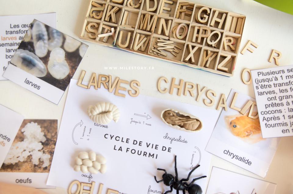Livres et activités sur les fourmis maternelle – coschooling