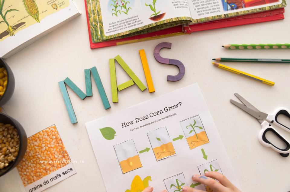 Ief Botanique coschooling – fiches et activités sur le maïs