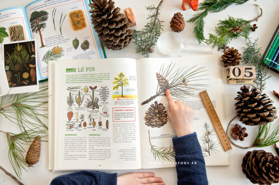 Botanique : les pins et autres conifères
