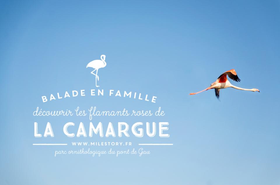 Où voir les flamants roses en Camargue - Balade en famille au parc ornithologique du pont de Gau