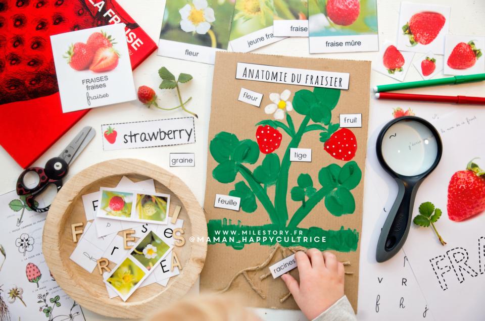 Activités sur la fraise en maternelle – cartes nomenclature – cycle de vie à télécharger