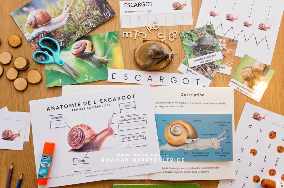 Activités thème Escargots en maternelle
