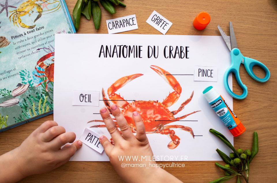 Le crabe en maternelle