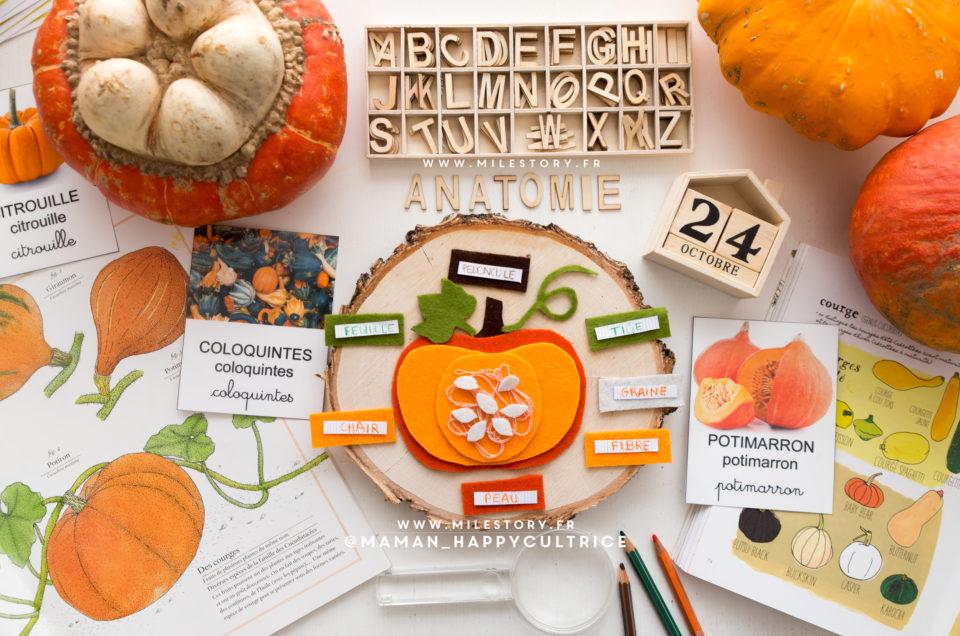 Activités citrouille maternelle d'inspiration Montessori